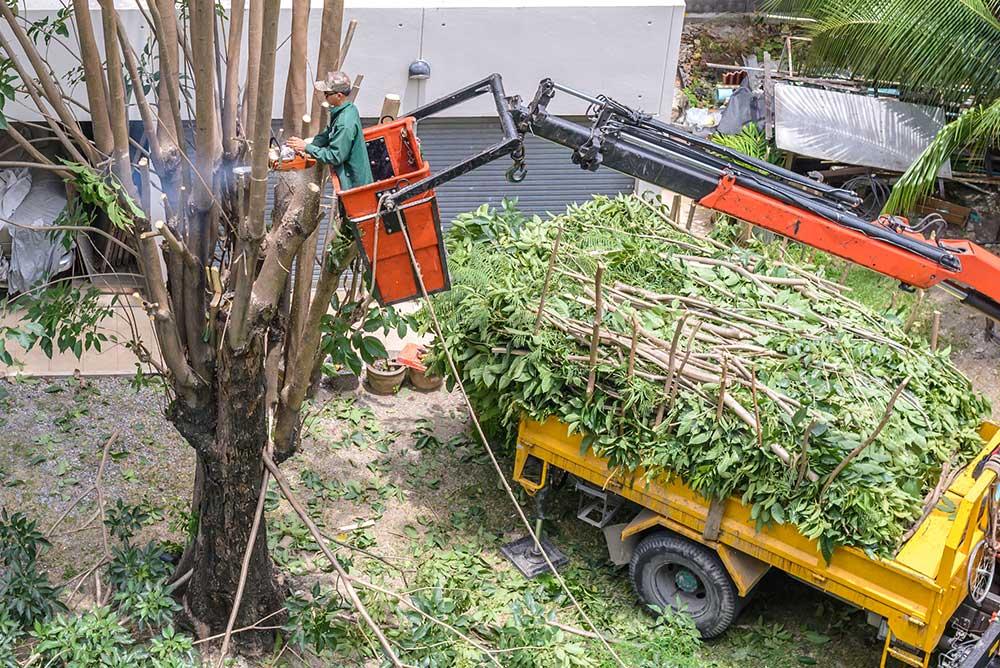 Sacramento-Tree-Pruning