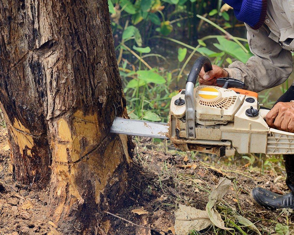 Sacramento Tree Removal